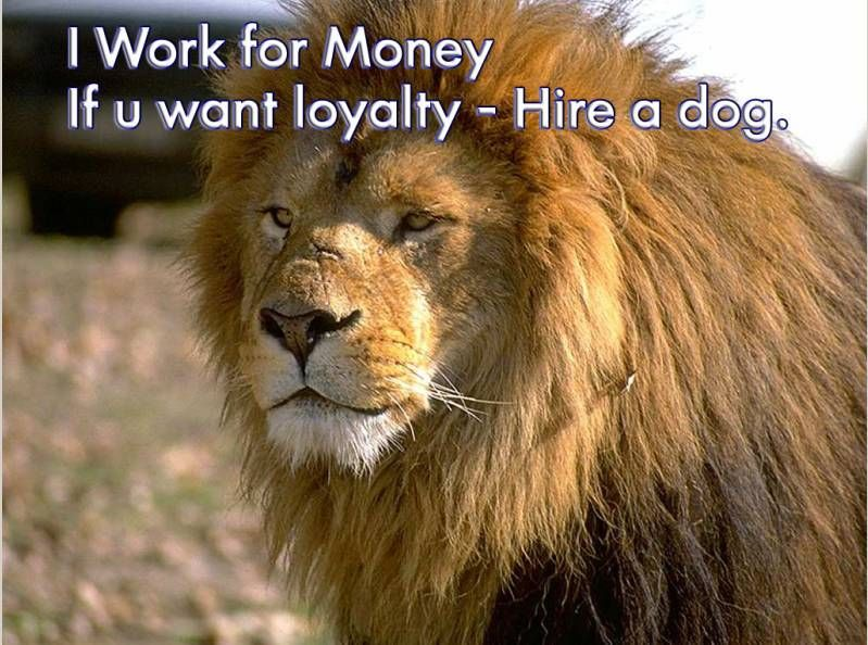 I-work-for-money-if-you-want-loyalty-hire-a-dog
