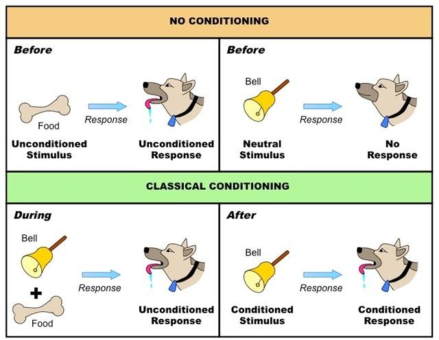 pavlov-dog-conditioning-experiment-operant-conditioning