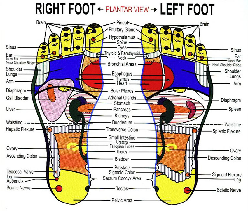 reflexology-foot-chart-lifeologia-very-complete-legs-healing-points-diagram