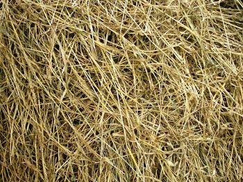 seno serbian church hay haystack, bundle of hay picture